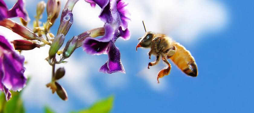 Bijen zaden-2